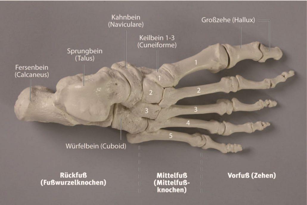 Der Fuß – ein empfindliches Wahrnehmungsorgan - Fuß-Schule München ...