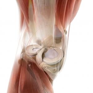 Blick ins Innere des Kniegelenks